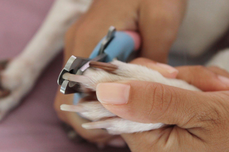 Обрезание когтей в домашних условиях